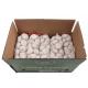 SUKSES bawang putih segar 5cm karton 10KG