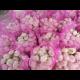 Liandahang bawang putih 5cm mesh bag