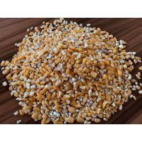 Jagung sebagai bahan untuk produksi makanan hewani